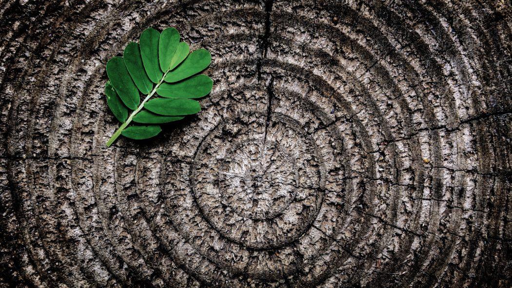 Doing New Things || Getting My Ayurvedic Dosha Determined